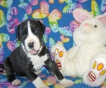 pups-4-weeks024.jpg